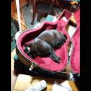 Cat nap in guitar case