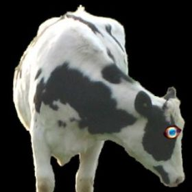 Cyclops Cow